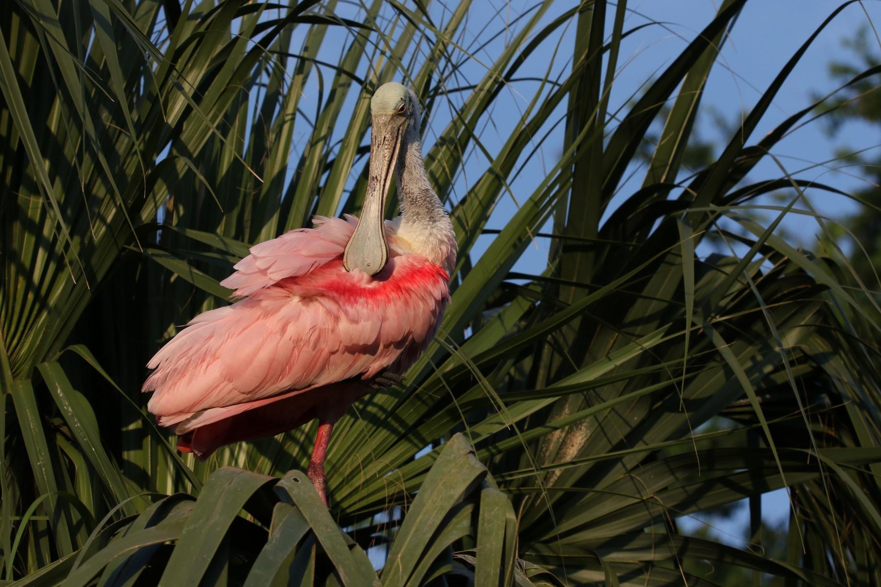 Wild Florida | Nature | PBS