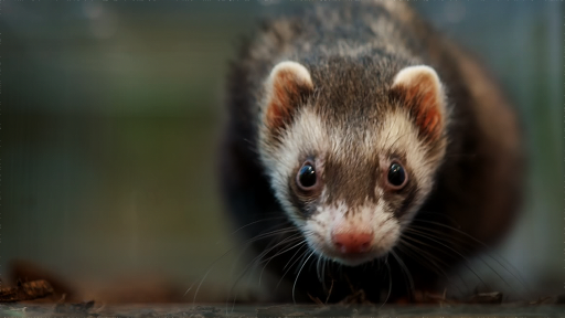 The Mighty Weasel -- Ferrets: Animals in Liquid Form