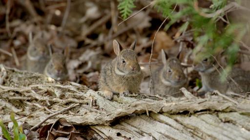 Good NATURE: Remarkable Rabbits