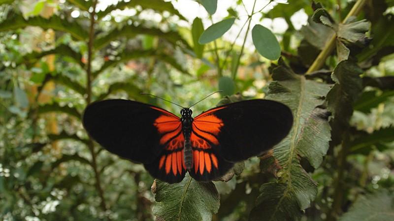 New Research Reveals New Origins for Butterflies   Blog   Nature   PBS