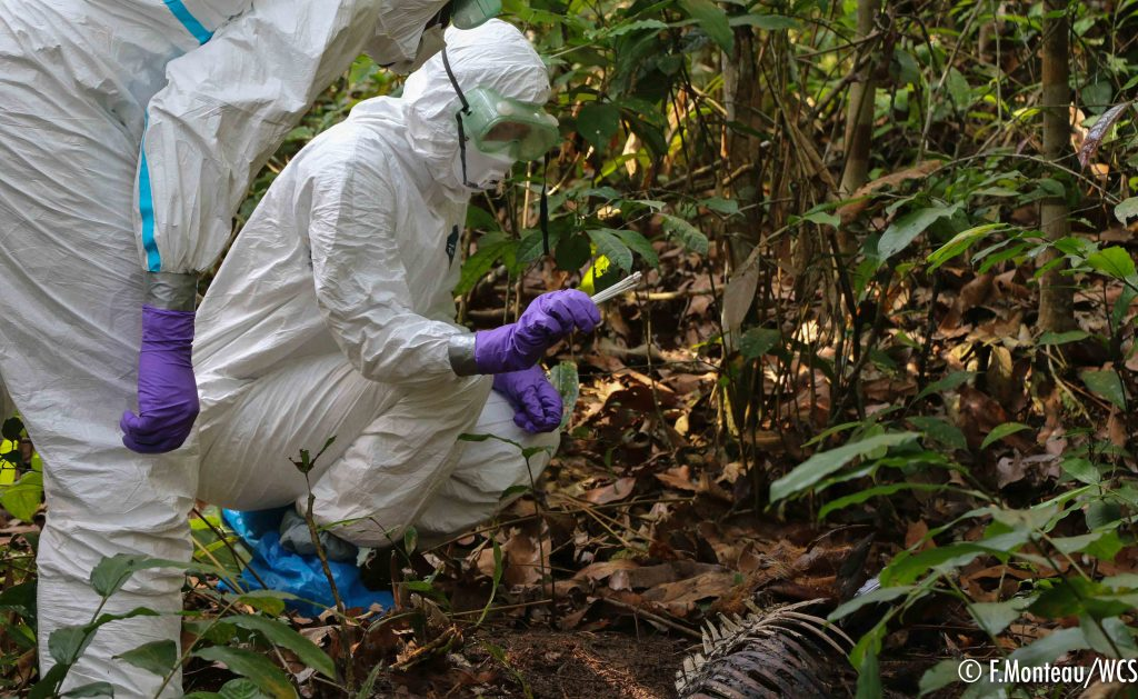 One Way to Prevent Epidemics: Monitoring Wildlife Mortality   Blog   Nature   PBS