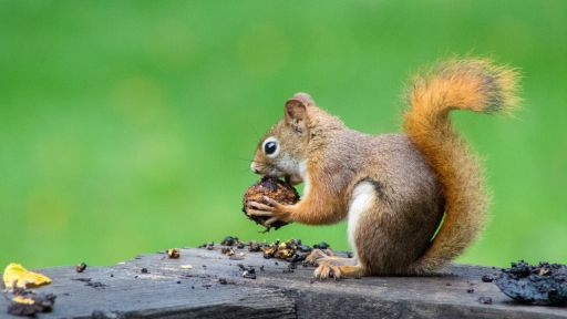 SquirrelMapper | Nature Nation