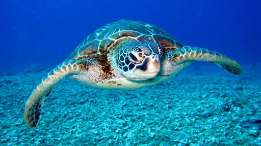Sea Turtle Fact Sheet