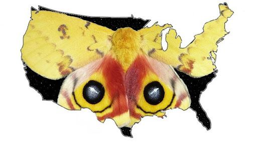 National Moth Week | Nature Nation