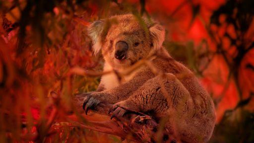 Australian Bushfire Rescue