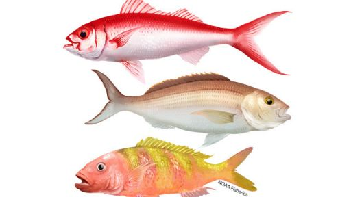 OceanEYEs | Nature Nation