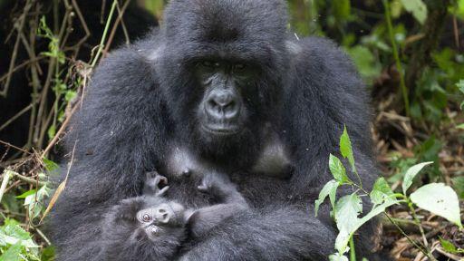 Primate Quiz: Which Primate Are You?