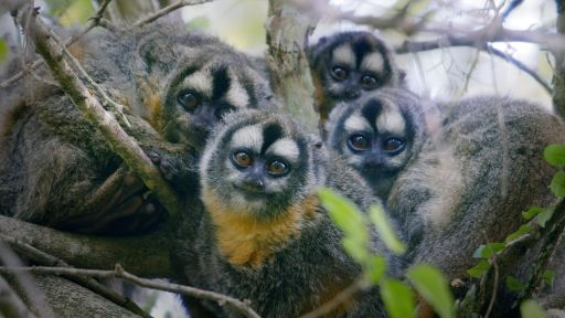 Family Matters | Primates