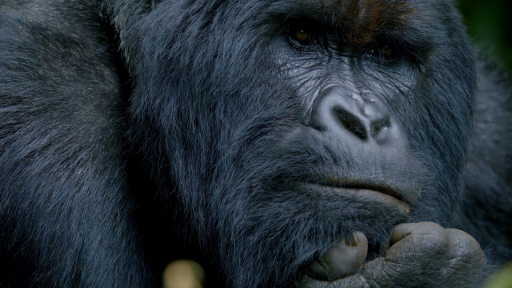 "Behind the Camera: Q&A with ""Primates"" Filmmaker Gavin Boyland"