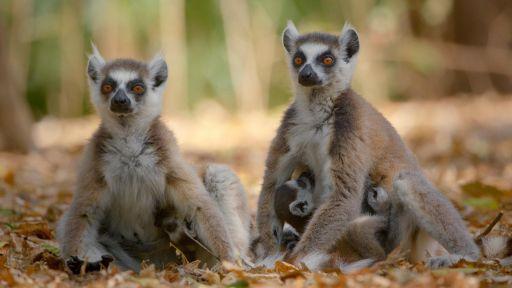 Family Matters | Primates