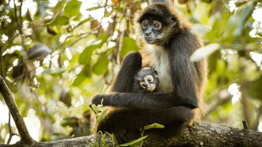 Good NATURE: Primates