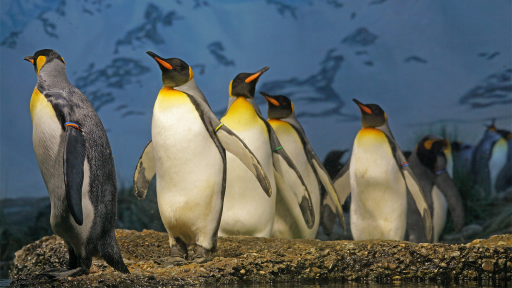 Penguin Fact Sheet