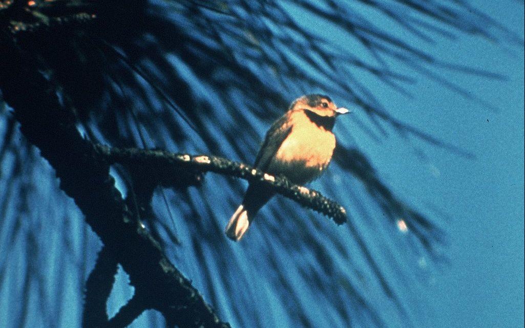 23 Species Proposed Extinct by U.S.