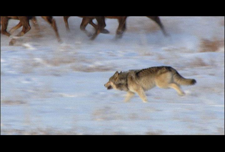 10 Years Feeding The Wolveszip