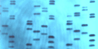 dna-genetic-fingerprinting-on-fingerprint-blue-backdrop-1-ajhd1