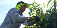 thumb01-farmworkerjustice