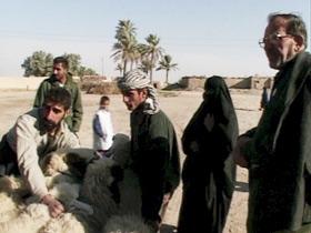 Sheep trade