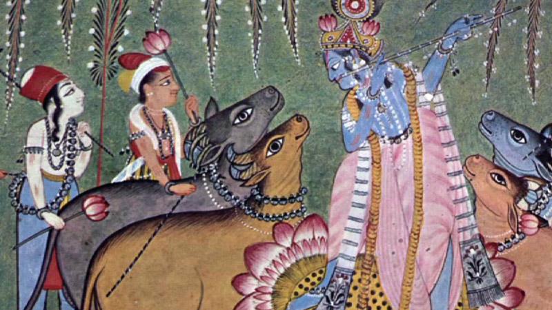 india u0026 39 s sacred cows