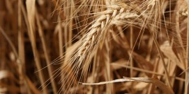 shavuot-grains-FEAT